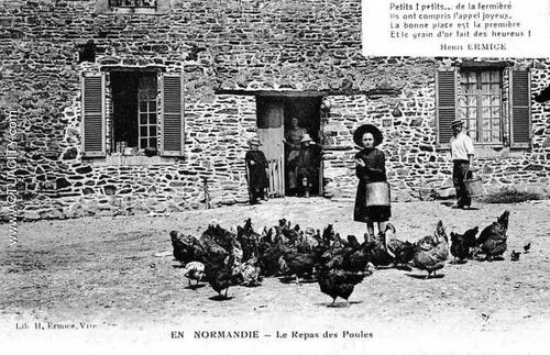 01- Les poules