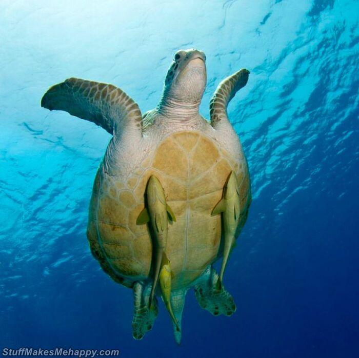 Dans la nature, tout est possible! 23  avec des animaux qui feront fondre votre cœur
