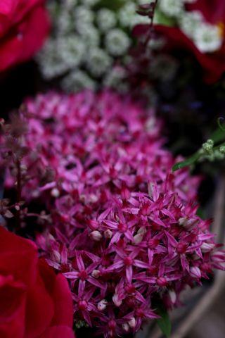 Trois compositions florales pour une journée entre jardinières