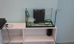 Mon projet d'aquarium d'eau douce pour des crevettes
