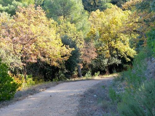 Forêt du Défens