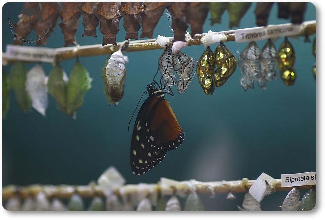 Nurserie de la Serre aux papillons (La que Lez Yvelines)
