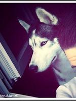 Jasko (20 mois)