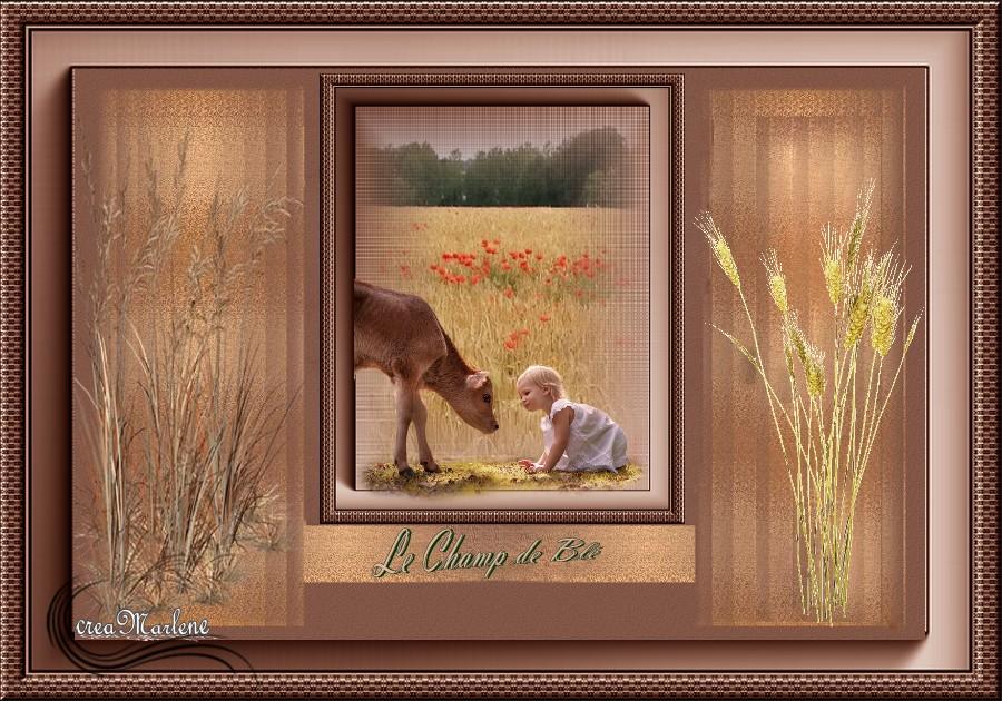 ♥ Le champ de blé ♥