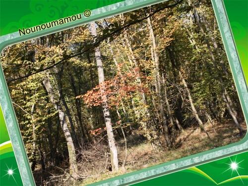 Promenade en forêt, suite...