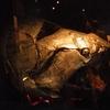 Canada 2009 Parc national de Miguasha (28) [Résolution de l\'écran] copie.jpg