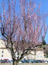 1er mars 2016 - Boucle Satillieu-Veyrines