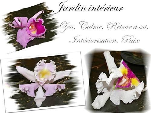 2012 03 13 jardin interieur floriscola (1)