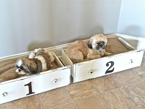 Byg en hundeseng