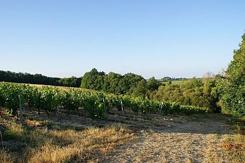 07-à travers les vignes2