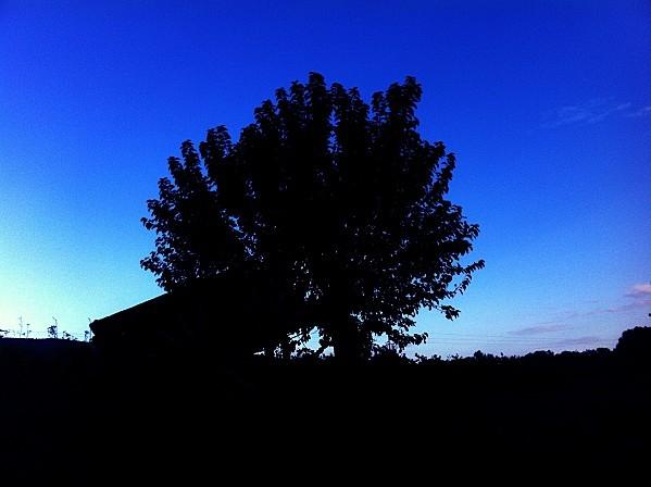 Copie-de-chevaux-effet-nuit017.jpg
