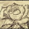 Gris devenu Rose