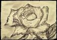 Quand le gris devient rose