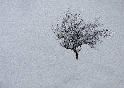 Un arbre dans le froid