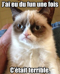 Grumpy le chat