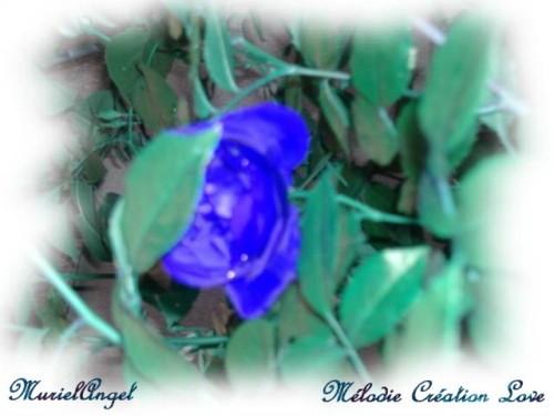 copirythe-Fleur-Bleu.JPG