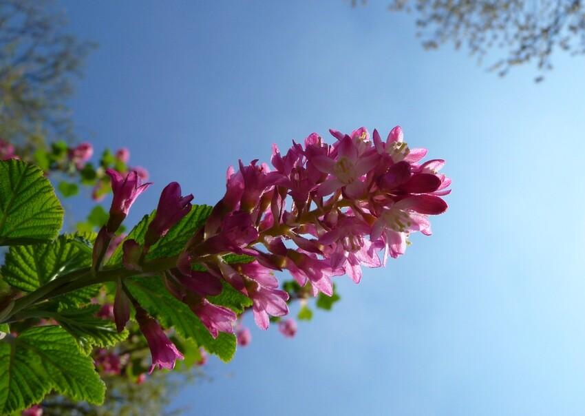 AnnickAmiens25.04.13.Fleurs