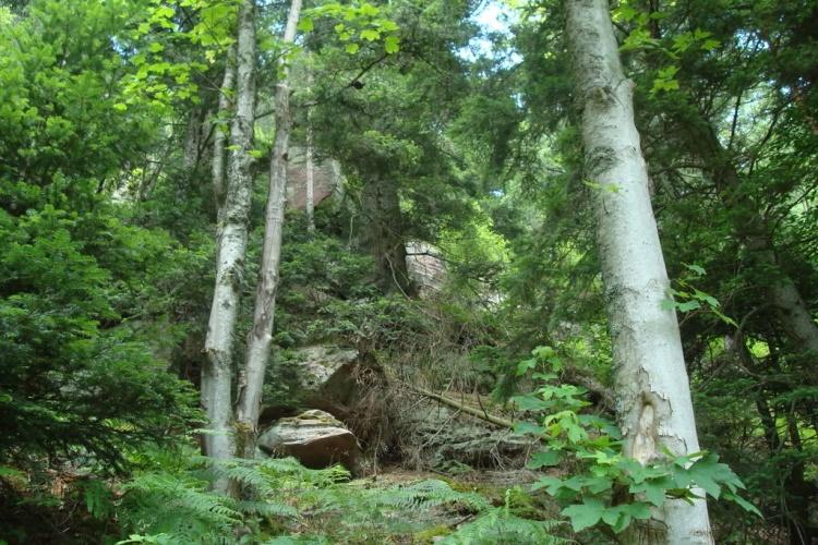 Vosges-Taennchel