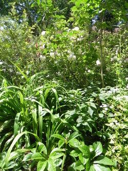 Mon jardin dans l'ensemble