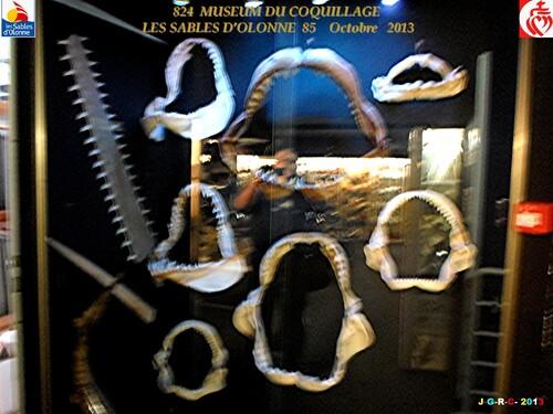 MUSEUM DU COQUILLAGE  11/16   vacances 10/ 2013  SABLES D'OLONNE    24/01/2014