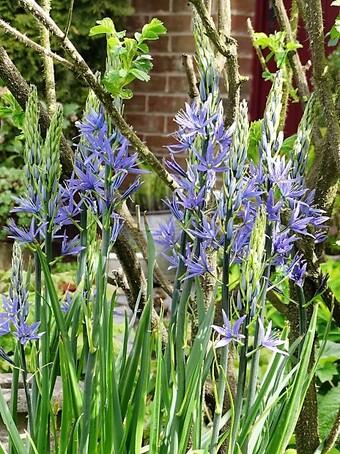 Quoi de neuf au jardin en ce début mai?