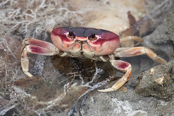crabe -1-