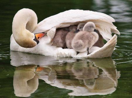 Jolie petite famille