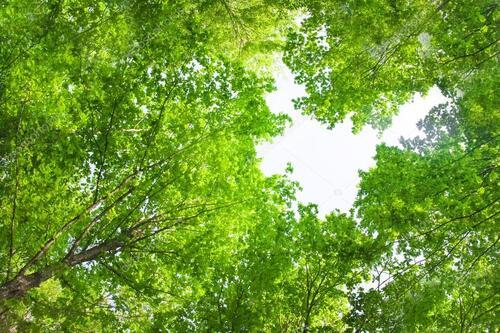 Araignées - Forêts - Tortue