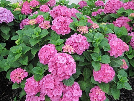 fleurs-4190.JPG