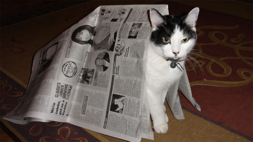 06 - Le chat et le journal