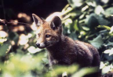 Blog de roselyne : Humanité, Nature,  Amour et lumière, Immunologie des animaux sauvages et domestiques
