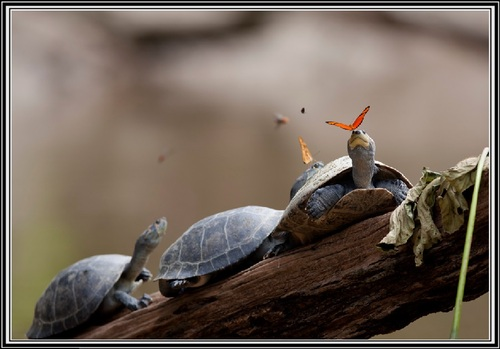Le papillon et les larmes de la tortue