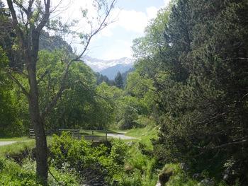 Vue vers le fond de la vallée du Sègre, le Puigmal et le col de Finestrelles