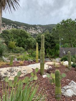 Gibraltar - parc botanique et pont Windsor