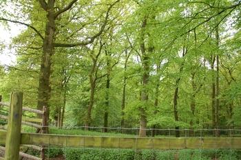 Parc animalier Bouillon 2013 enclos 281