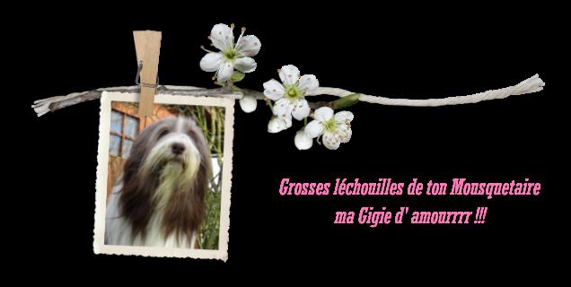 Joyeux Anniv Gigie d' amourrrr d' Athos & Cheyenne