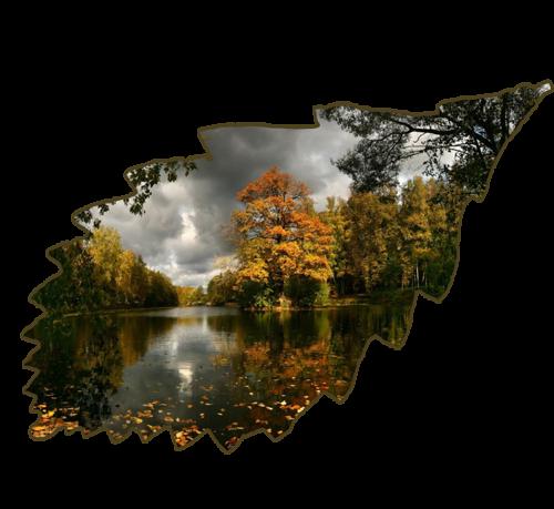 Feuilles d'automne 4