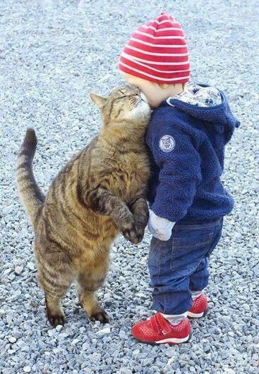 Et ce pro des câlins. | 27 photos qui prouvent que les chats sont les meilleurs amis de l'homme