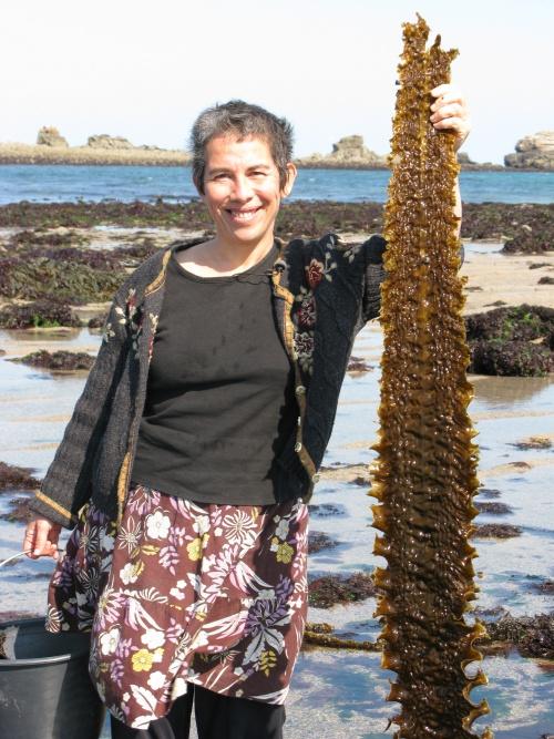 Atelier Algues et Cuisine du Bord de mer