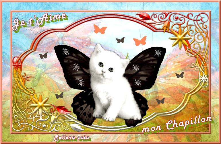 **Mes Chapillons**Cartes