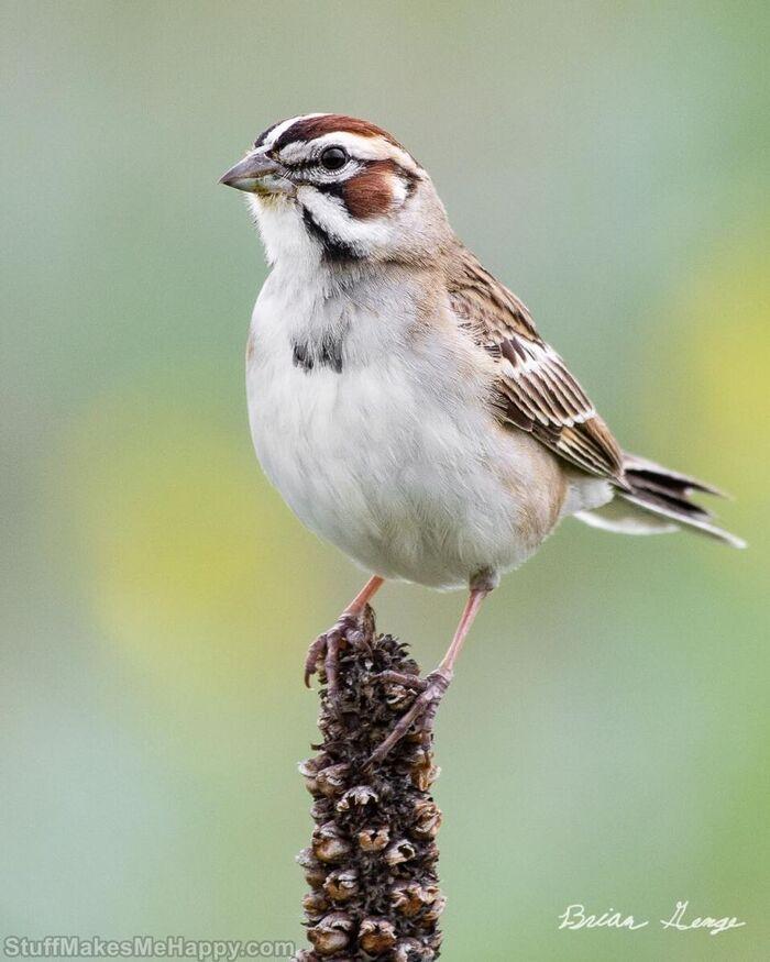 Portraits d'oiseaux merveilleux du photographe de 17 ans Brian Genge