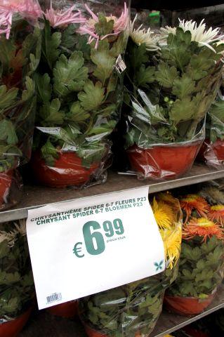 Famiflora - Quoi de neuf en ce moment ?