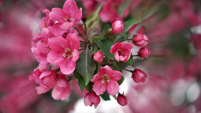 20 images de fleurs #2