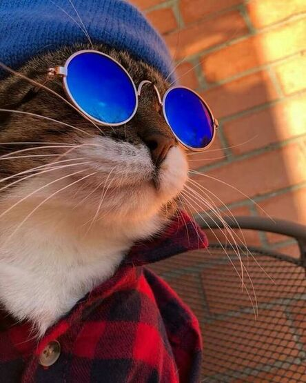 With Sunglasses Day on the horizon, here are some inspiring Instagram pics of dapper kitties in shades.