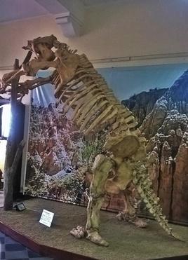 les bêtes bizarres de tarija: l'ancêtre du tigre dent de sabre