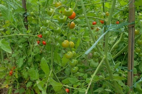- Deux des principes de la permaculture -