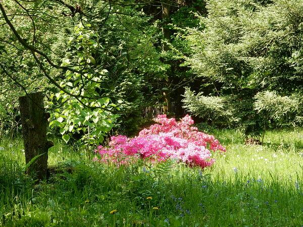 Fin de la visite du jardin Jean Massart
