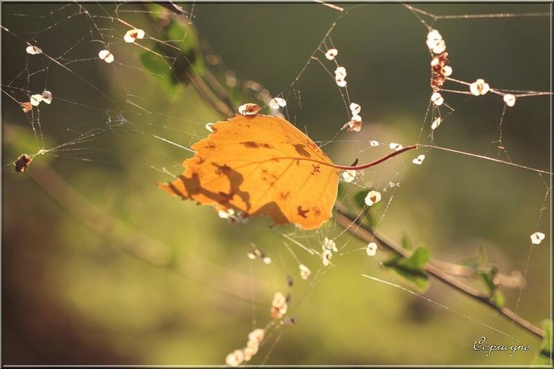 Rêverie d'automne au jardin...