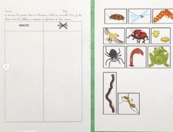 Tri insectes / Autres