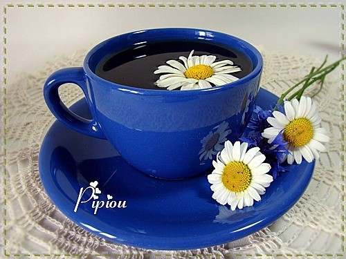 Pause café (20)